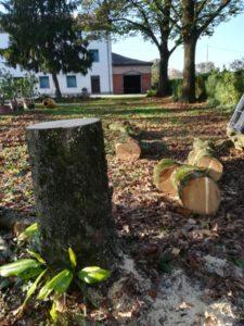 abbattimenti alberi bologna