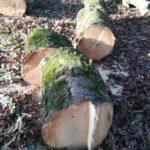 abbattimento alberi bologna
